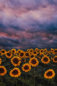 A photo of sunflowers and a colorful sky represent the benefits of finding the right treatment for anxiety and depression