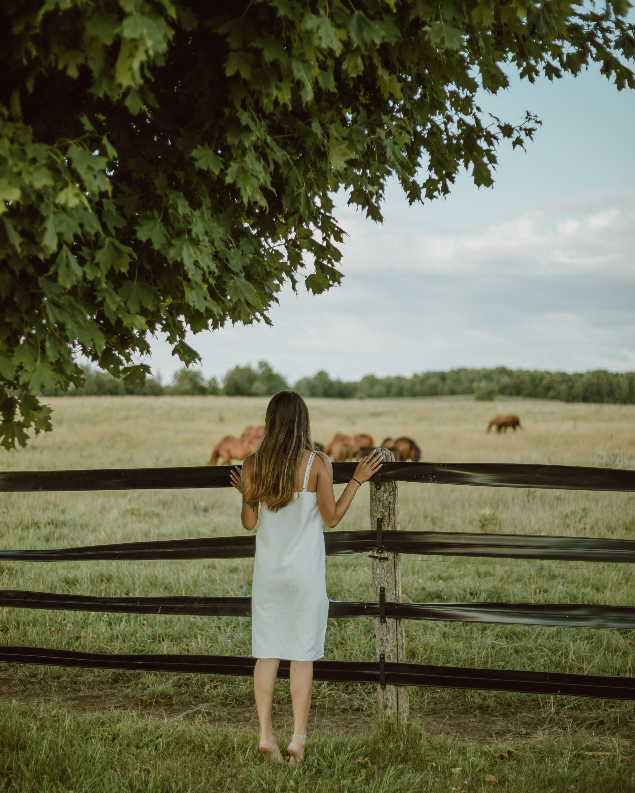 A woman who appears to be a Highly Sensitive Person leaning against a fence watching horses