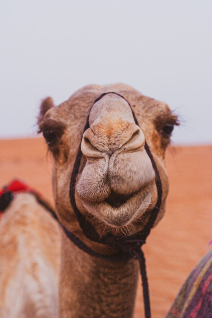 a camel representing a straw that breaks a camel's back